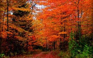 door county fall colors door county fall colors wallpaper 1050164