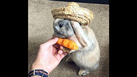 gambar kelinci lucu  imut  hilangkan kalut
