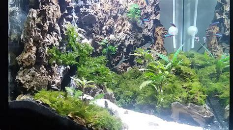 Pasir Kandila Aquascape Air Terjun 1kg indahnya air terjun di dalam aquascape