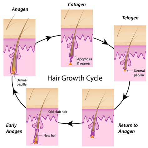 should thick hair pubic hair be waxed for women laser hair removal for different skin and hair types