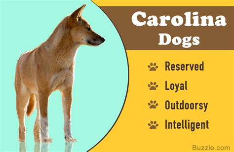 Useful Information About the Wild Yet Friendly Carolina ...