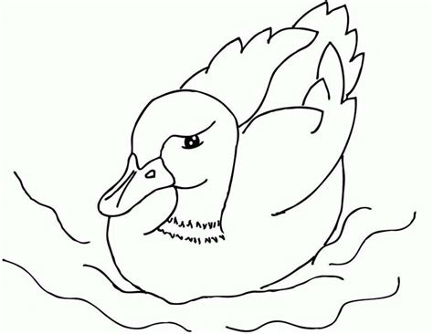 duck swimming coloring page a mallard duckling is swimming coloring page a mallard
