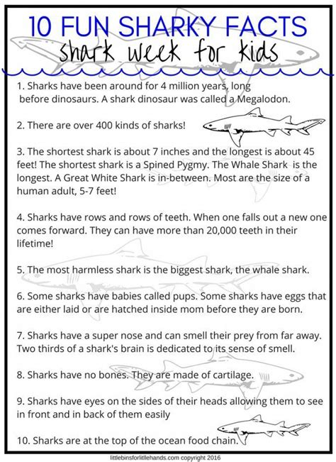 17 best ideas about shark facts for on preschool themes shark facts and