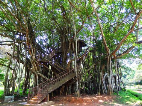 Little Rome Of Sri Lanka Top 5 Travel Destinations Of Henarathgoda Botanical Garden