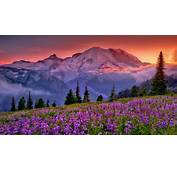 Sunset Mountain Flowers Rainier National Park Washington
