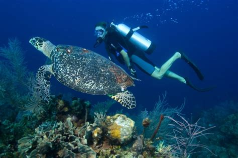 best place to dive top 5 places to scuba dive with sea turtles