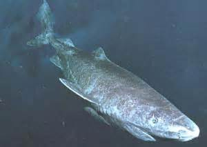 are lake monsters just sharks sharknewz