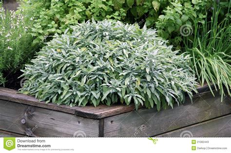herb garden plants herbs plant on the raised garden bed stock image image