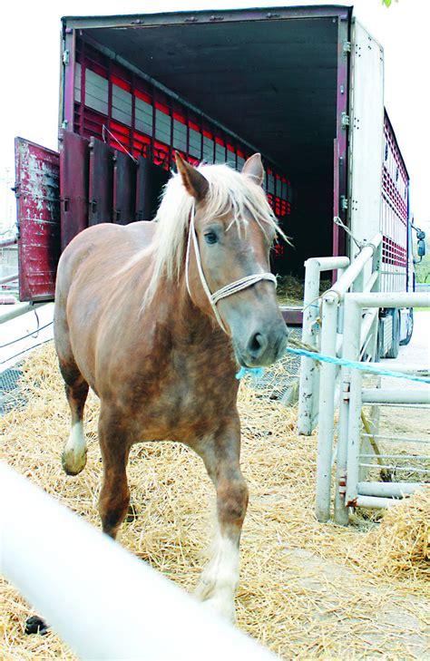 stop long transport  horses  slaughter  gaitpost