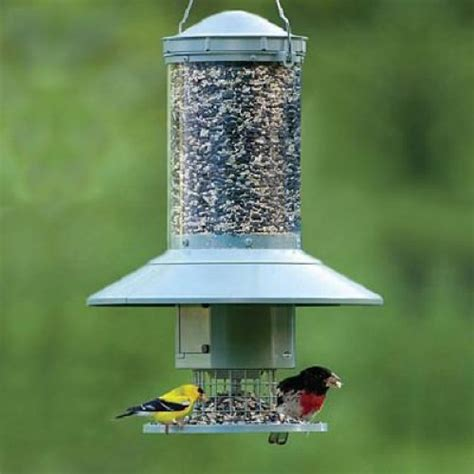 Automatic Bird Feeder wingscapes auto feeder programmable automatic bird feeder ebay