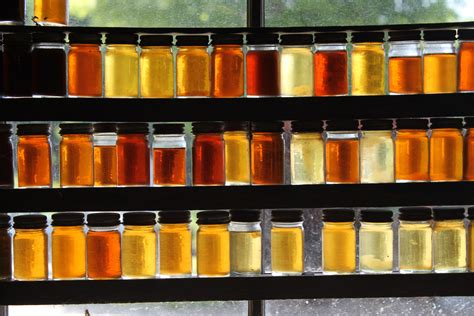 color of honey the importance of honey during survival survivalkit