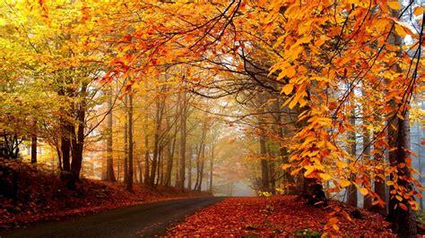 autumn trees road fog landscape hd wallpaper