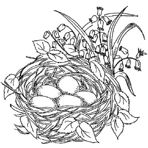 bird pictures to color coloring pages birds beautiful bird nest coloring pages