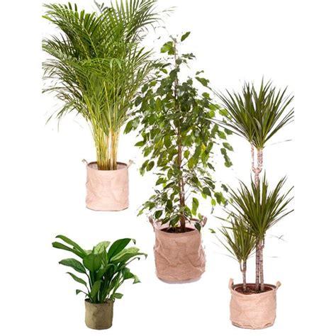 Plante Purificatrice D Air by Pack Plantes D 233 Polluantes L Achat Vente Plante Pouss 233 E