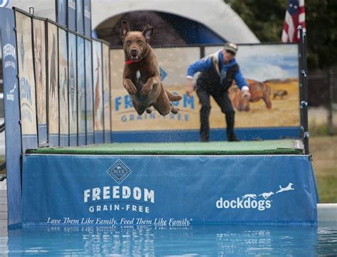 dock dogs dock dogs at clark county fair the columbian
