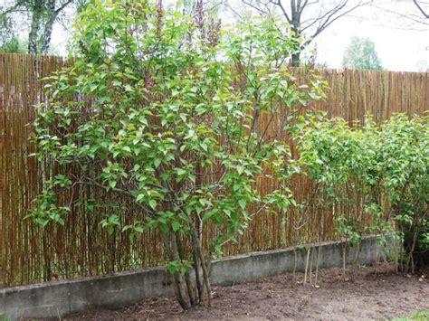 Hid 6 Mata 3 Mata mata wiklinowa 1 6 x 3m www mata wiklinowa24 pl mata wiklinowa maty wiklinowe ogrodzenie