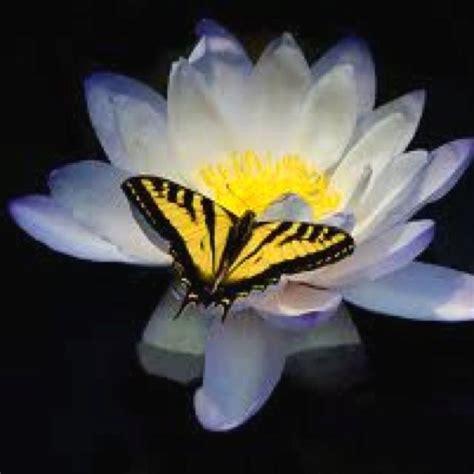 yellow butterfly tattoo best 25 yellow butterfly ideas on