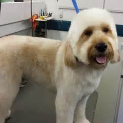 haircuts for dogs in andrews texas haute dog haircuts pet groomers dallas tx reviews