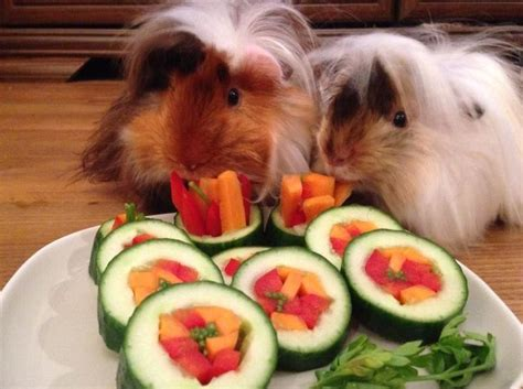 vegetables guinea pigs can eat can guinea pigs eat cucumbers votebyissue org