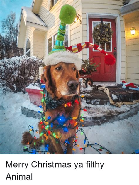 Merry Christmas Ya Filthy Animal Meme - 25 best memes about merry christmas ya filthy animal