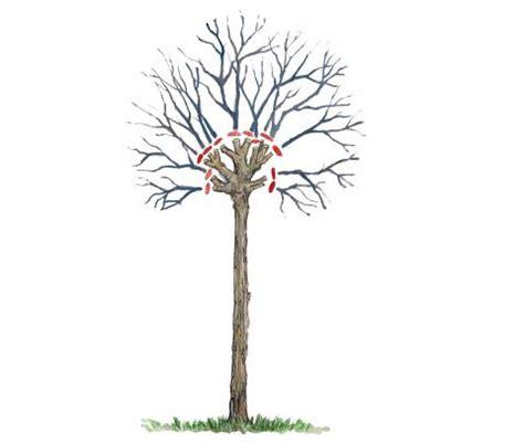Baum Schneiden Wann 4782 by Baum Schneiden Wann Trompetenbaum Schneiden Wann Ist Der
