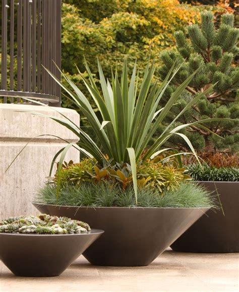 Yucca Palme Drau En 3170 by Palmlilie Eine Bezaubernde Zier Und Nutzpflanze