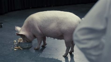 black mirror pig your complete guide to binge watching black mirror on