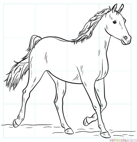 image gallery horse drawings to colour how to draw an arabian horse step by step drawing tutorials