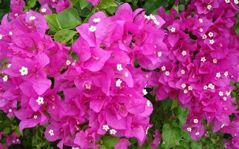 casa di fiori scegliere i fiori in casa terrazzo e giardino