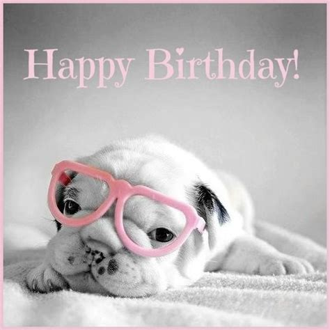 Animals Wishing Happy Birthday 1063 Best Images About Birthday Wishes On Pinterest