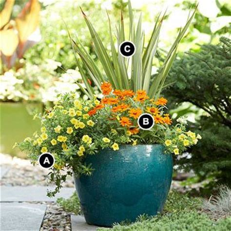 plant combination ideas for container gardens simple container garden add pizzazz to a