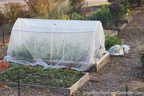 how to prepare your vegetable garden for winter aoc