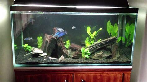Aquarium Fish Model Cumi 13 Liter blue dolphin aquarium cyrtocara moorii