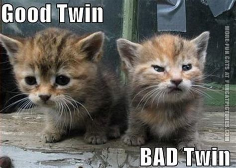 twin cats good twin cat vs bad twin cat fun cat pictures