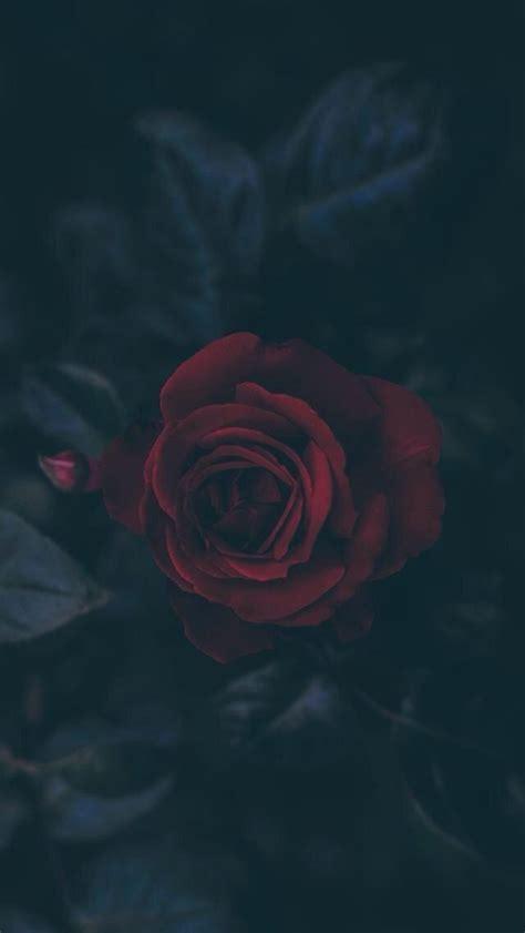 pinterest fashionista roses rose wallpaper
