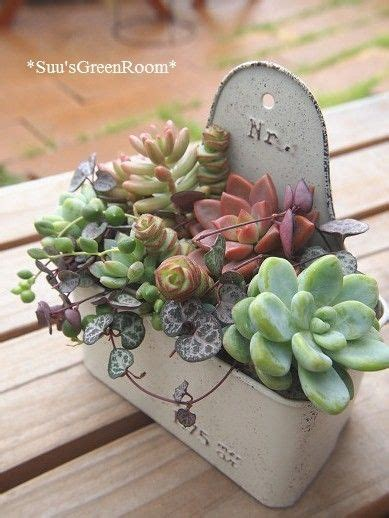 possibilities are endless when it comes to planting succulents or cacti container gardening