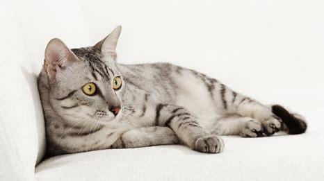 alimentazione gatti piccoli alimentazione cani e gatti quali sono le differenze