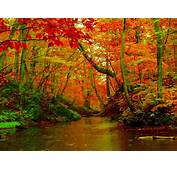 Autumn Forest River Desktop Background Hd Wallpapers 1560