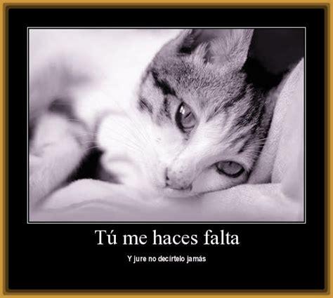imagenes de amor de gatitos tristes 45 im 225 genes de gatitos tiernos con frases y mensajes