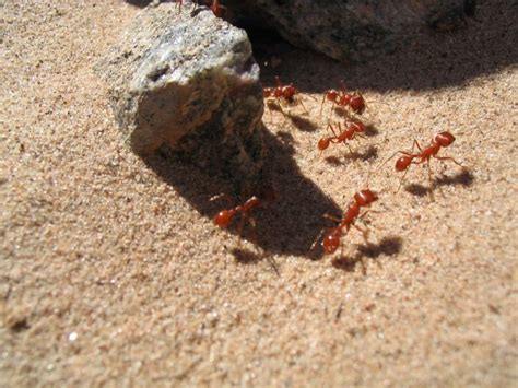 ants in bed ant gallery bed bugs pest control manhattan