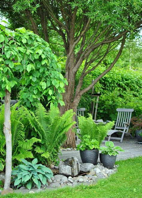 Fern Garden Ideas 1000 Images About Gardening Hosta Fern On Ferns Shade Garden And Hosta