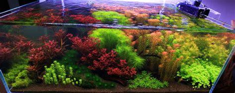 Aquascape Aquarium Plants Dolnośląskie Forum Akwarystyczne Zasady Kompozycji