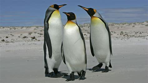 google images penguins penguin 3 0 did google s website eating penguins get you