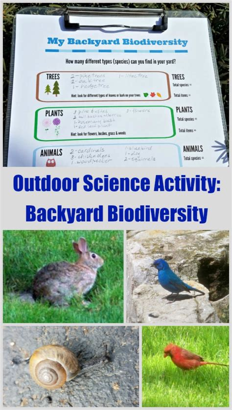 backyard science experiments for kids ecology science activity biodiversity in your own