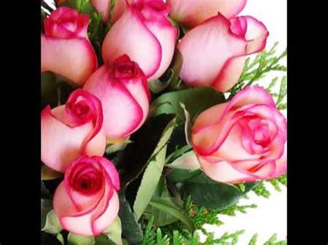 imagenes de rosas rosas hermosas image gallery imagenes de rosas hermosas