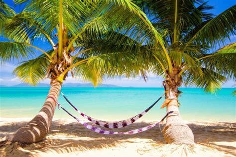 fotos de hamacas en la playa palmeras y hamacas en una playa tropical 38478