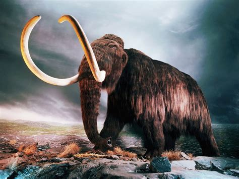 woolly mammoth wallpapers hd wallpapers id