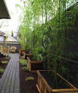 landscaping with bamboo bob vila s blogs