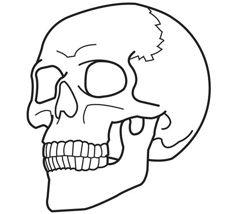 skull coloring sheets free printable skull coloring pages for