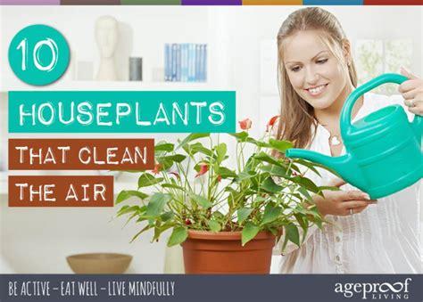 10 houseplants that clean the air urban planters 10 houseplants that clean the air urban planters